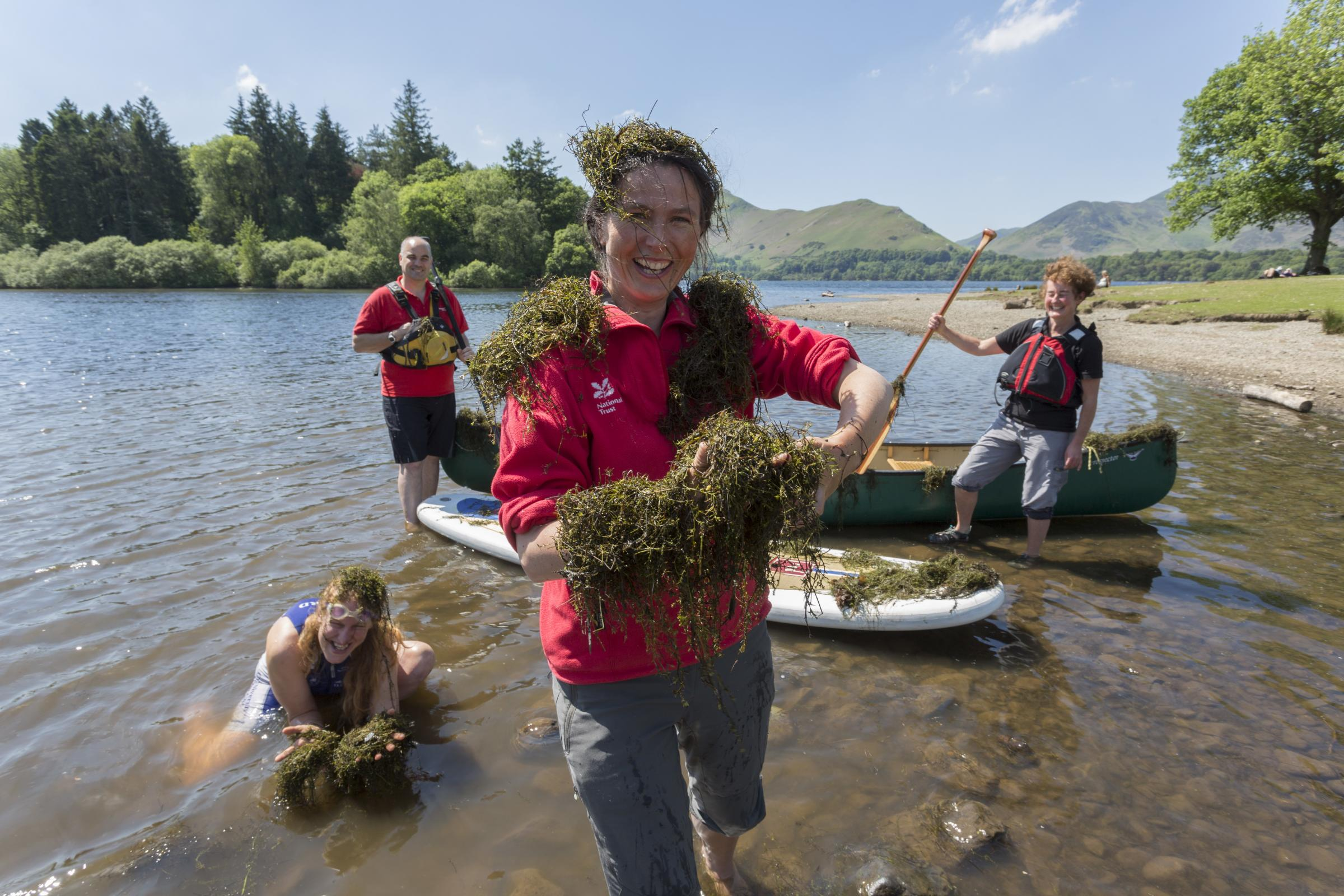 Plant invading the Lake District is finally getting wider attention