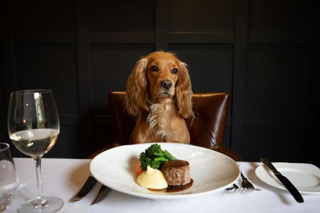 Dogs can dine alongside their owners at Rothay Manor Hotel in Ambleside. Picture: Polly Baldwin