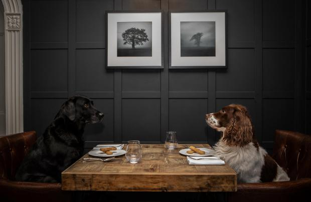 The Westmorland Gazette: Dogs can dine in the hotel's Brathay lounge. Picture: Polly Baldwin