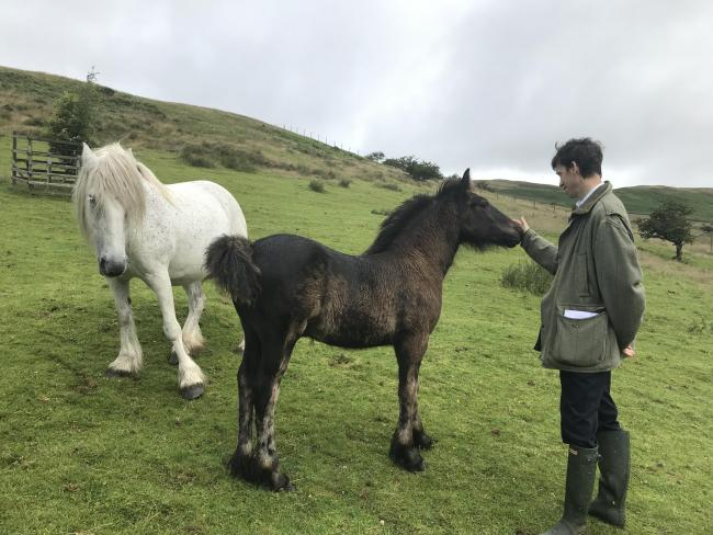 Rory Stewart with the Fell ponies