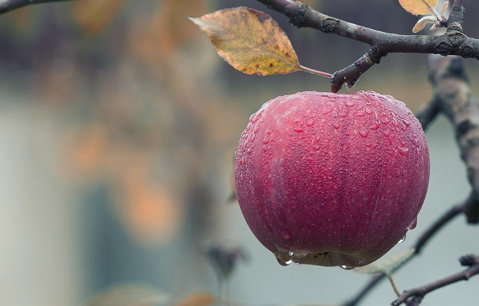 Juice your harvest at Beetham Nurseries' Traditional Apple Weekend 2019