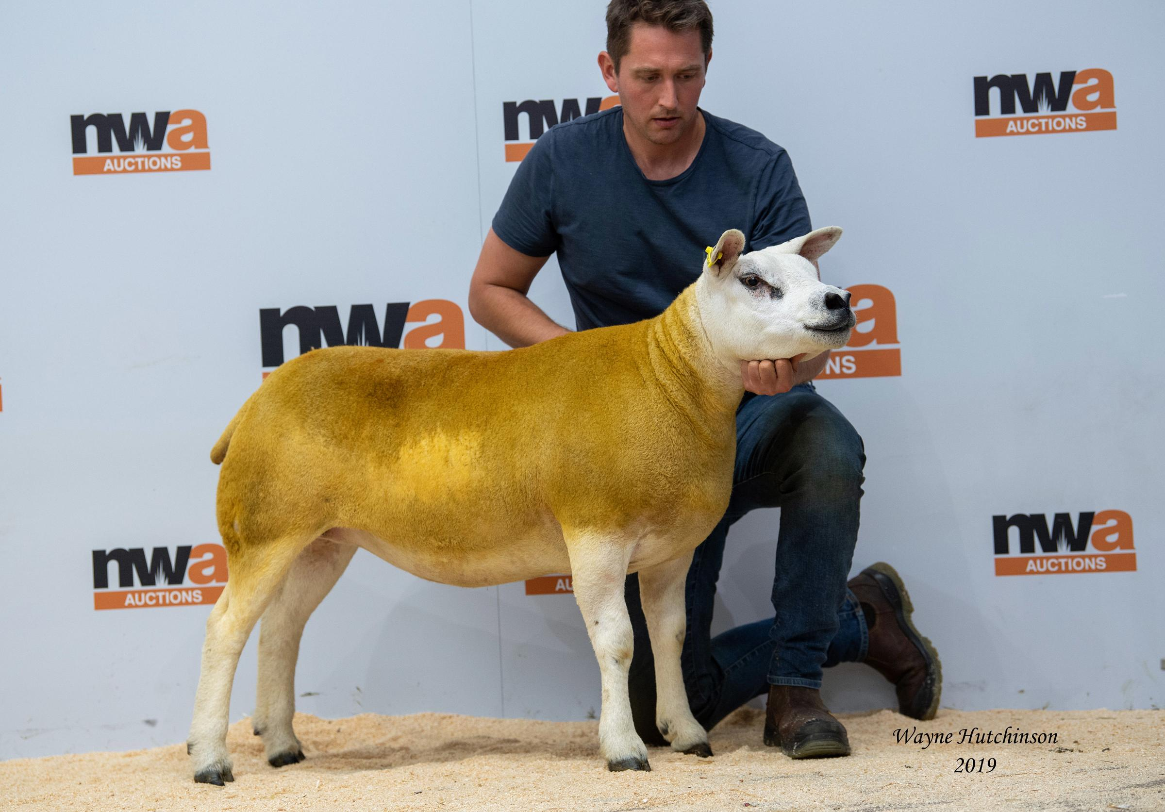 New records at Texel sale