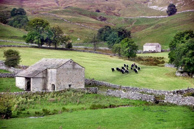 A farm in the Yorkshire Dales