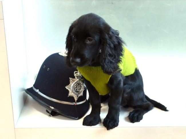 Meet the latest recruit to join the police force