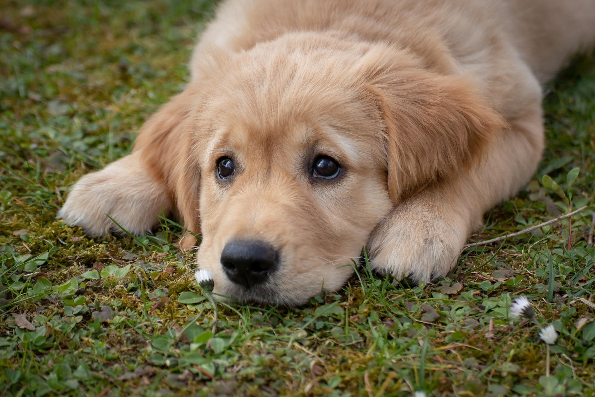 Product recall: dog food brand has risk of salmonella