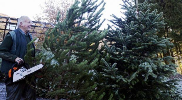 The Westmorland Gazette: EXPERT: Harry Barker has been selling Christmas trees for over 50 years