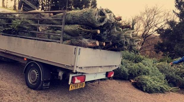 The Westmorland Gazette: READY: Cut trees ready to be taken home
