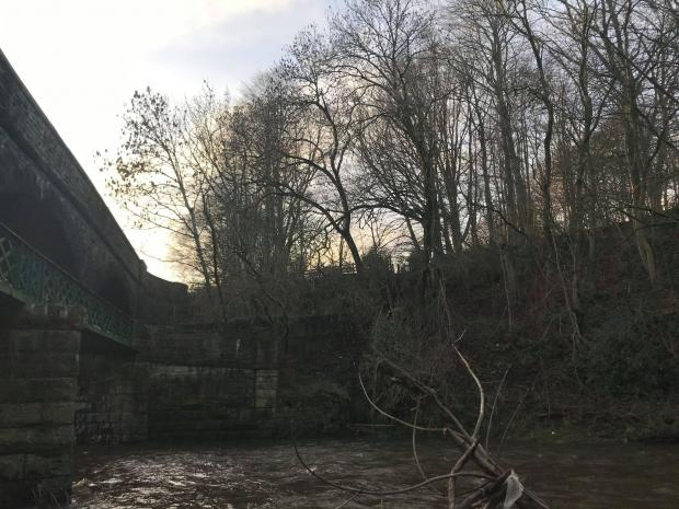 The Westmorland Gazette: The branches at the edge of the river