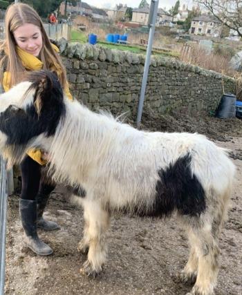 WARNING: Owner calls for awareness on the danger horses are in from improper feeding