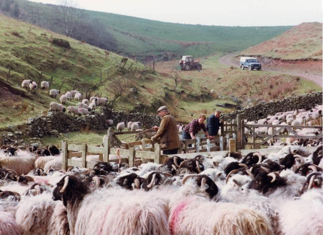 Sheep scab control project