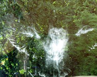 GHOSTY VISION: The spooky imprint of 'powder down' which showed where an owl had collided with the window