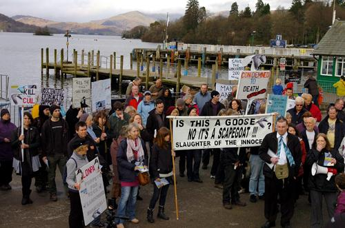 Protestors gather at Bowness Bay to oppose the culling of 200 Canada Geese