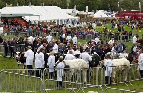 Cattle judging at the show 7dc3b6f680