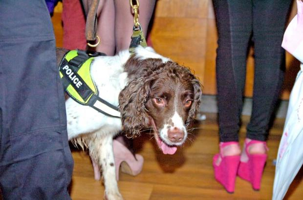 Police dog Alfie in action in a Kendal pub