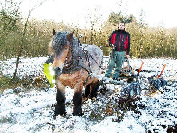 The Celtic Horse Logging company at Savin Hill in the Lyth Valley