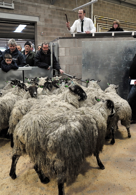 First sale attracts hundreds to Kendal's auction mart