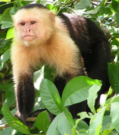 Monkey on the loose in South Lakeland