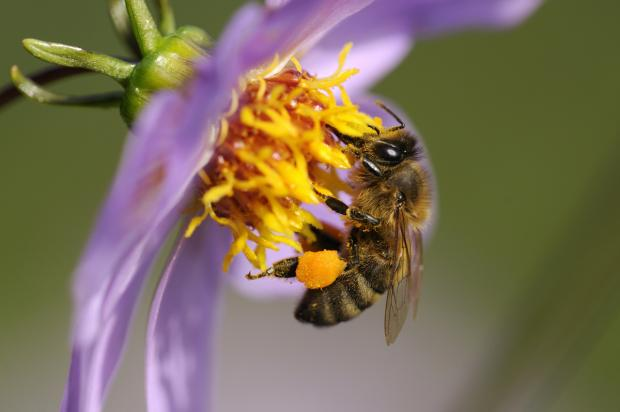 Introductory bee-keeping course to be held at Carnforth