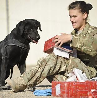 Private Zina Saunders, a dog handler with 1 Military Working Dogs, gives Hazel, who works as a search dog Christmas presents which were sent by the handler's friends and family in the UK.