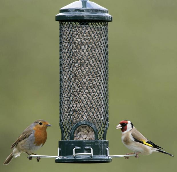 A Robin and a Goldfinch on a birdfeeder