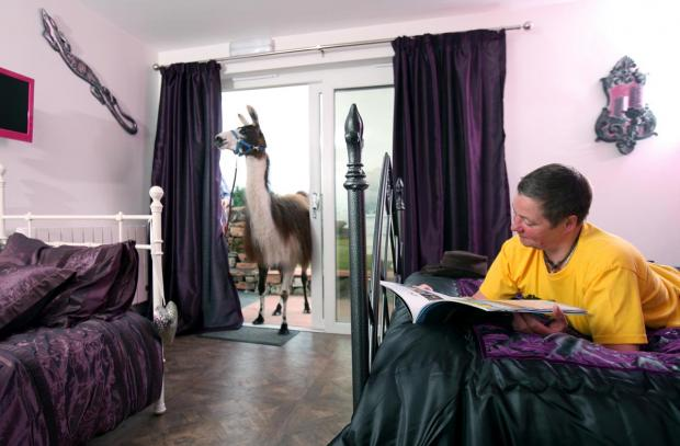 ANIMAL MAGIC: Llamas Pyjamas one of top UK's top ten quirky places to stay