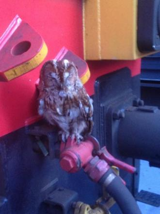 Owl takes train from north Lancashire to Northamptonshire