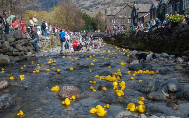 Making a splash: crowds turn out to watch annual charity duck race at Glendinning Beck