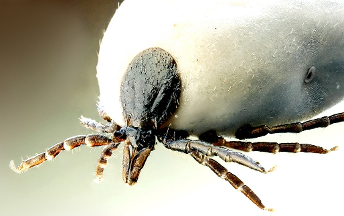 Watch out for ticks warning to Cumbrians