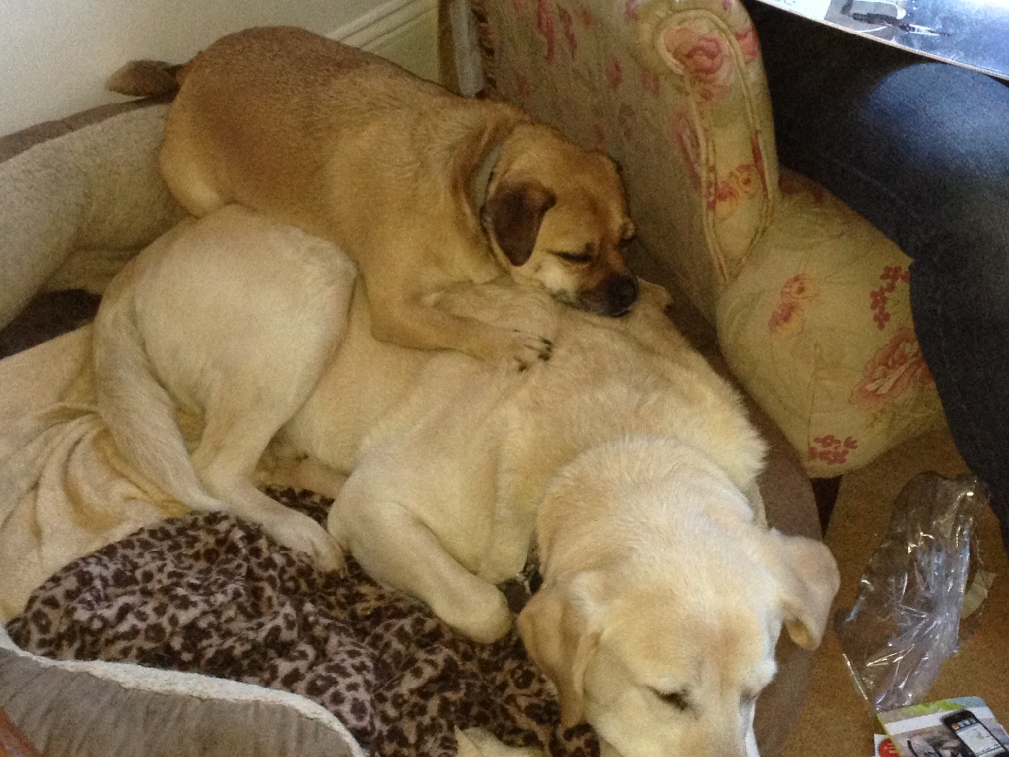 Pepper, on top, using her best friend as a cushion