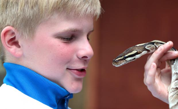 Tyler Baines's encounter with a snake at the Wildlife Oasis