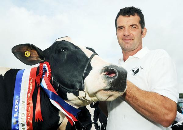 The overall champion cow with owner Andrew Dennison of Scales Park Farm