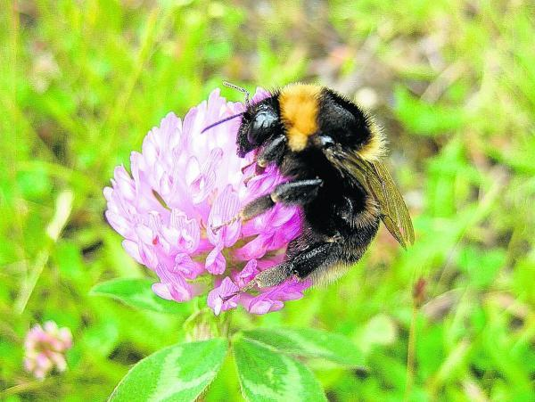 Festival near Penrith on Sunday will celebrate the bee