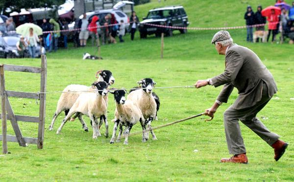Lakeland tradition at its fintest will be on show at the Patterdale Dog Day on Saturday – with sheepdog trials, a hound show and much more all centred around man's best friend