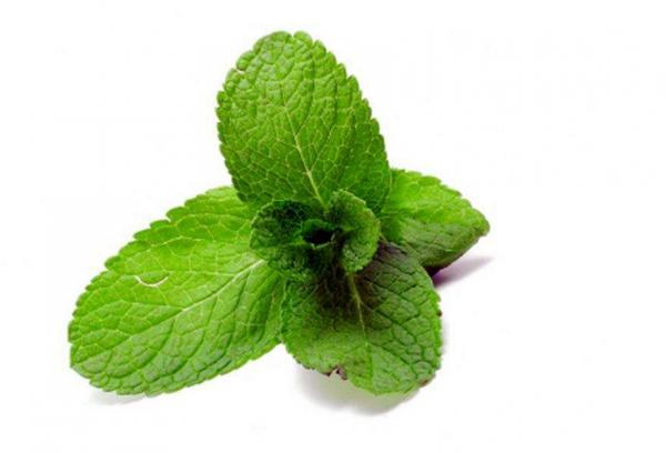 A fresh look at the refreshing taste of mint