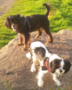 The Westmorland Gazette: Send us your favourite photos of your pets