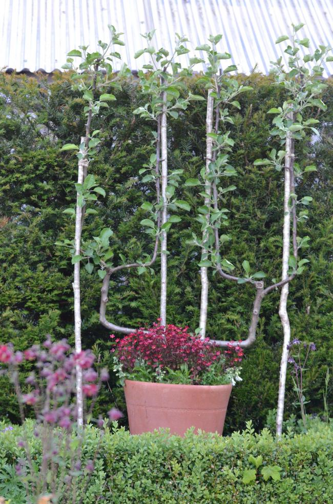 Gardening Make Sure Your Fruit Tree Will Be Pot Happy The