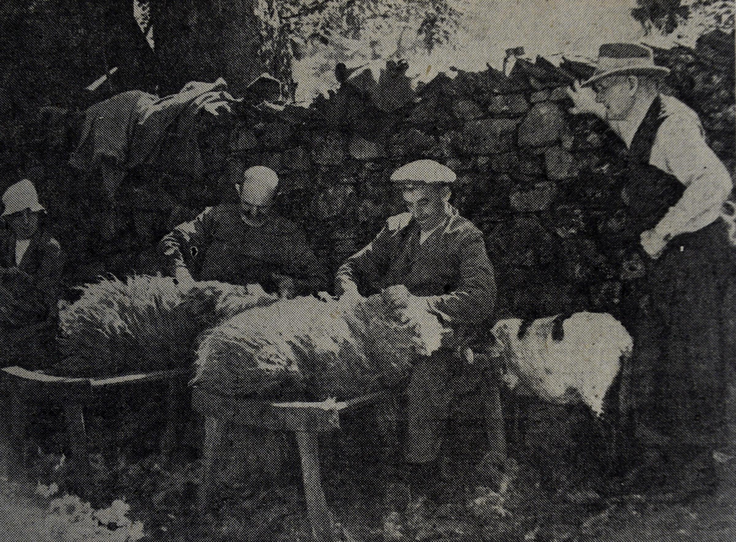 Sheep clipping at Kentmere Hall in 1944