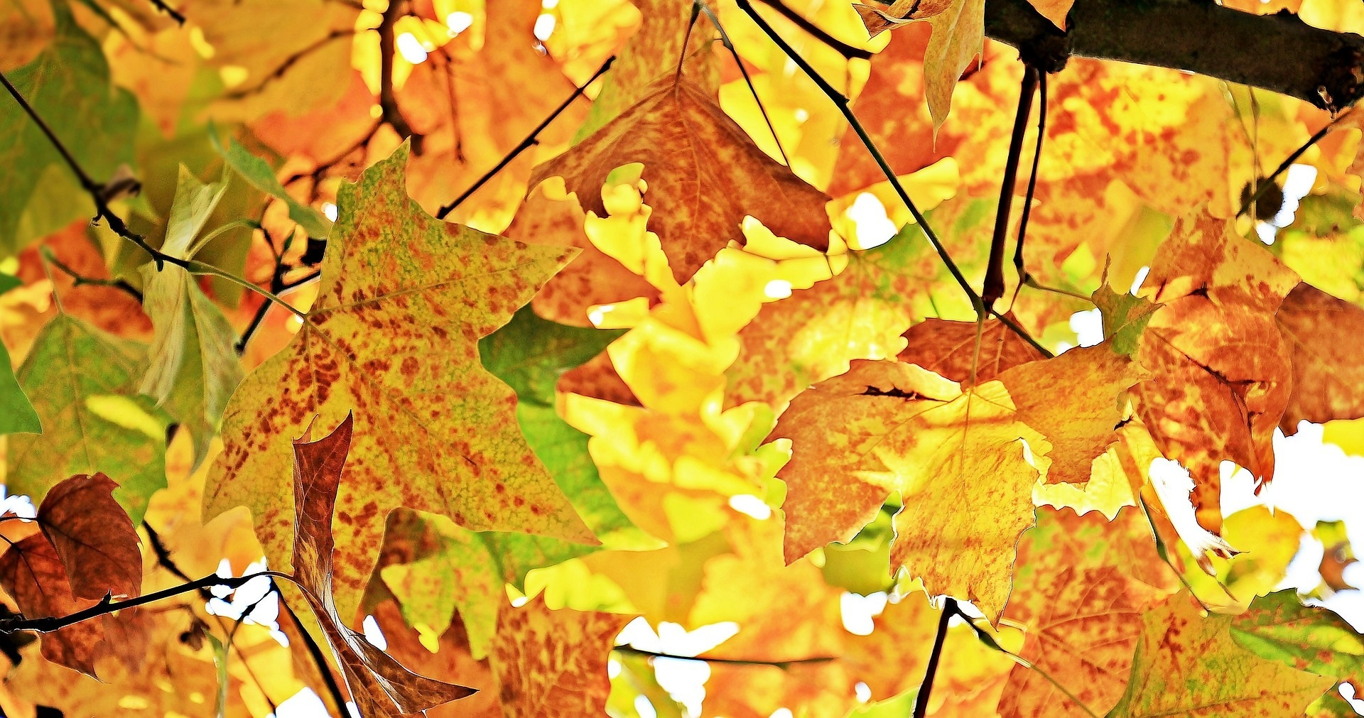 Autumn leaves (Picture from Pixabay)