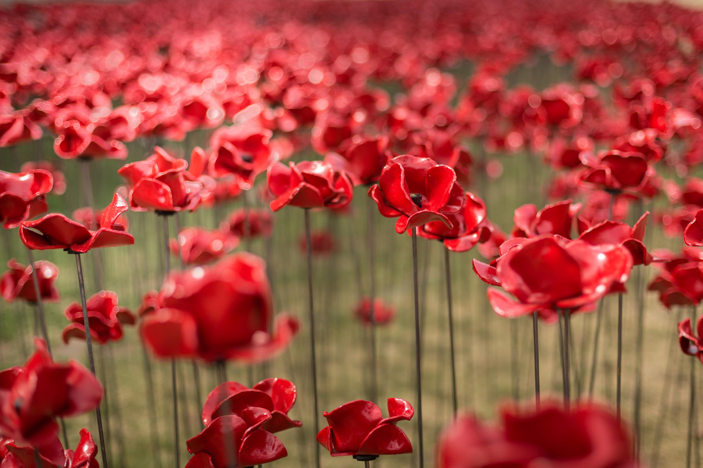 Carlisle Castle hosts the iconic poppies outside cascade by the touring World War One 14-18 Now, called Poppies: Weeping Window