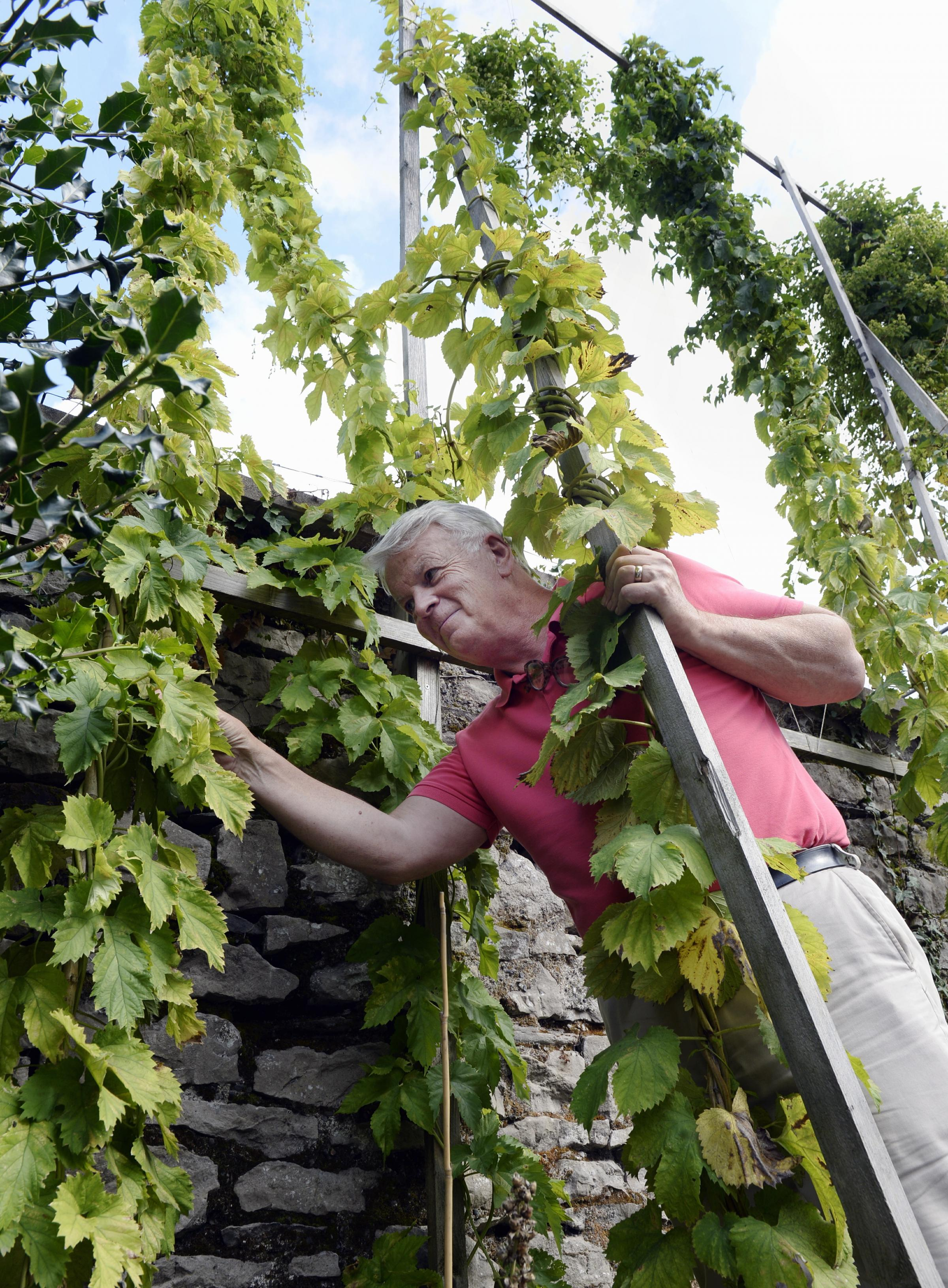 The Factory Tap proprietor Ronnie Mullin with his hops. Picture: Jon Granger