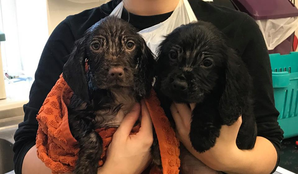 Puppies found abandoned in skip