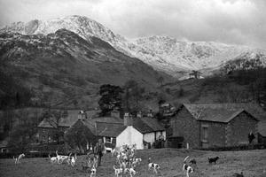 Man pictured has been identified as Arthur Irving, the Huntsman of the Eskdale and Ennerdale Foxhounds