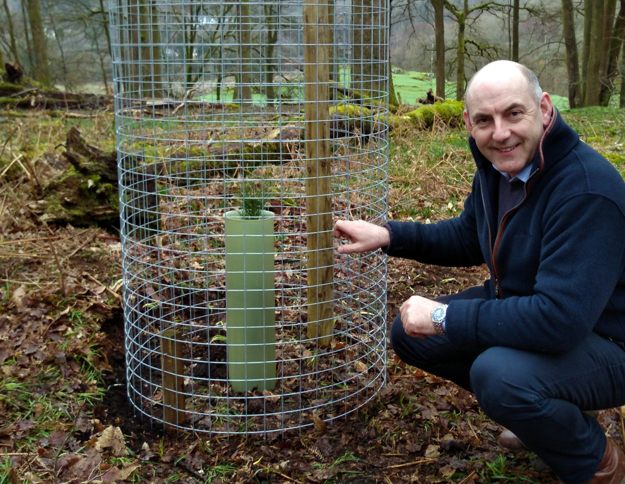 Tree planting to boost reds in Cumbrian squirrel territory battle v greys